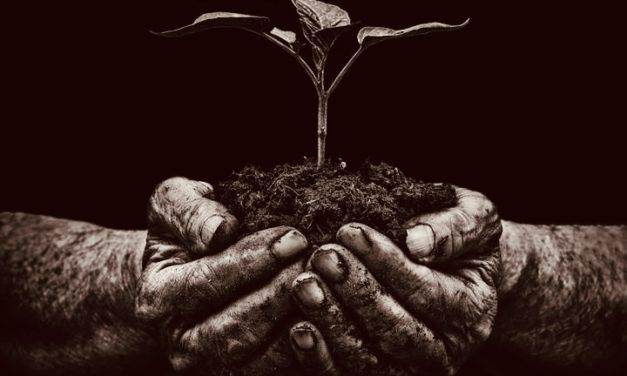 Nourrir puis sevrer : La fonction de cheikh, du Prophète à nos jours